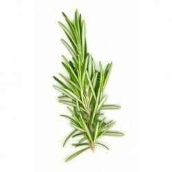 Rosemary Dried